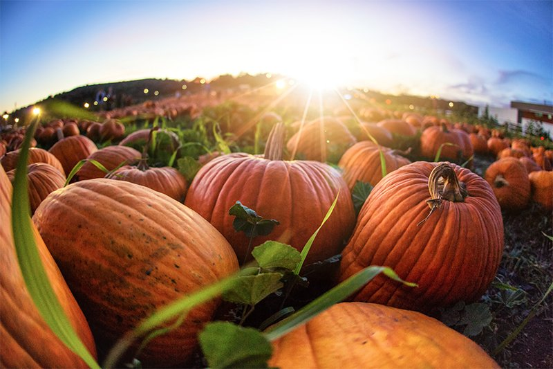 The Surprising Health Benefits of Pumpkin