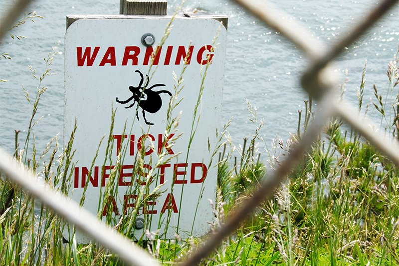 4 Steps to Prevent Lyme Disease and Rocky Mountain Spotted Fever